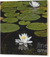 Lovely Pond Lily Wood Print