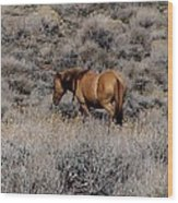 Lovely Sorrel Wild Horse In Western Nevada Wood Print