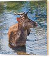Lovely Time In Water.  Male Deer In The Pampelmousse Botanical Garden. Mauritius Wood Print by Jenny Rainbow
