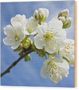 Lovely White Apple Blossoms On Branch Wood Print