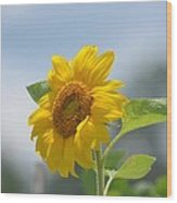 Lovely Yellow Sunflower Wood Print