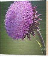 Loving Lavender Wood Print