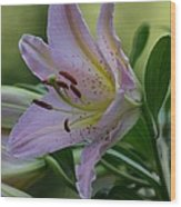 Loving Lilies Wood Print
