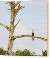 Low Angle View Of Cormorants Wood Print