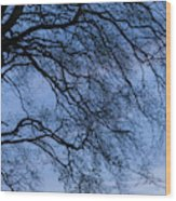 Low Angle View Of Tree At Dawn, Dark Wood Print