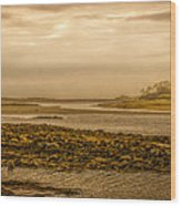 Low Tide Cape Porpoise Maine Wood Print