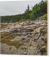 Low Tide - Walking On The Bottom Of Saint Lawrence River Wood Print