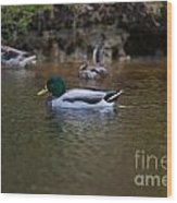 Lowcountry Duck Gathering Wood Print