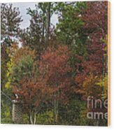 Lowcountry Fall Color Wood Print