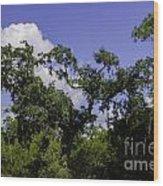 Lowcountry Life Oaks Wood Print