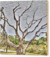 Lowcountry Marsh On Sea Island Wood Print