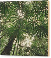 Lowland Tropical Rainforest Fan Palms Wood Print