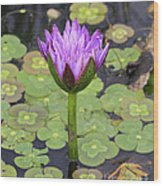 Lucky Lily Wood Print