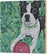 Lucy With Ball In Grass Wood Print