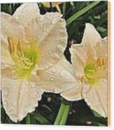 Lullaby Baby Daylilies Wood Print