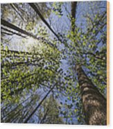 Lumberjack Heaven Wood Print