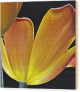 Luminescent Tulips Wood Print
