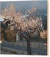 Luminous Almond Tree Wood Print