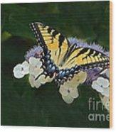 Luminous Butterfly On Lacecap Hydrangea Wood Print