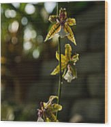 Luminous Chain Of Orchids Wood Print