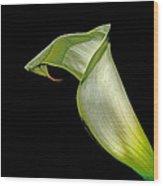 Luminous Lilly Wood Print
