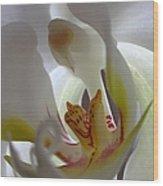Luminous Orchid Wood Print