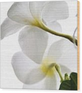 Luminous Plumeria Wood Print