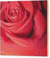 Luminous Red Rose 6 Wood Print