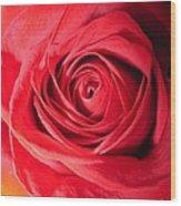 Luminous Red Rose 7 Wood Print