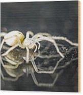 Luminous Spider Wood Print
