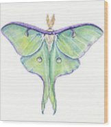 Luna Moth Actias Luna Wood Print