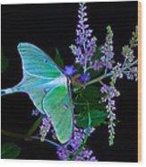 Luna Moth Astilby Flower Black Wood Print
