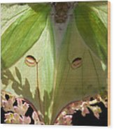 Luna Moth Faux Eyes Wood Print