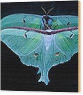 Luna Moth Mirrored Wood Print