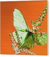 Luna Moth On Astilby Orange Back Ground Wood Print