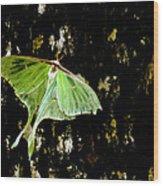 Luna Moth On Tree Wood Print