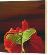 Luna Moth Poppy Evening Sky Wood Print
