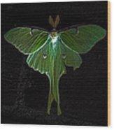 Lunar Moth Wood Print