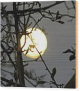 Lunar Still Life 2 Wood Print