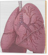 Lungs And Bronchi Wood Print
