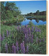 Lupin And Lake Wood Print