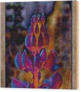 Lupin Glow Wood Print