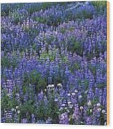Lupine And Aster Wood Print