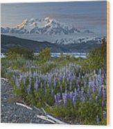 Lupine And Mount Elias Wood Print