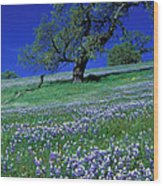 Lupine And The Leaning Tree Wood Print
