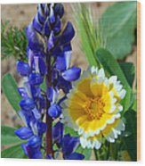 Lupine And Tidy Tip Wood Print
