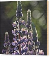 Lupine At The Gate Wood Print