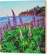 Lupine Bay Fortune Wood Print