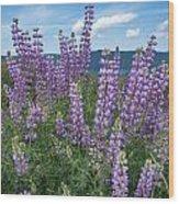 Lupine Blooms Of Bald Hills Wood Print