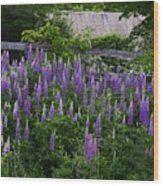 Lupine By The Fence Wood Print